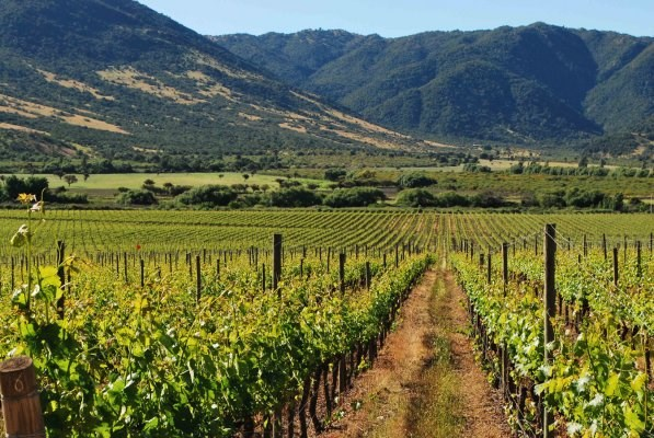 Full Day Colchagua Valley Tour: Casa Silva & L'Apostolle Wine Tours